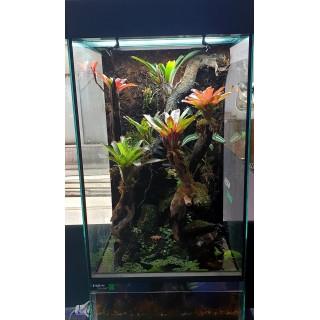 Terrarium planté 60x57x110 WYSIWYG