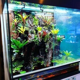 Terrarium planté 120x85x110 WYSIWYG